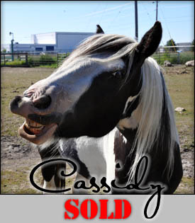 Cassidy - 2006 Mare SOLD